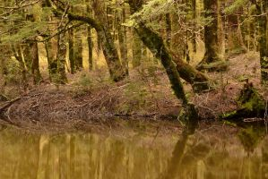 Beech Tarn by LiquidityImages