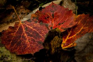 Beautiful Leaves by Thessen