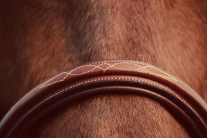Fancy Stitich by Equus-Photography