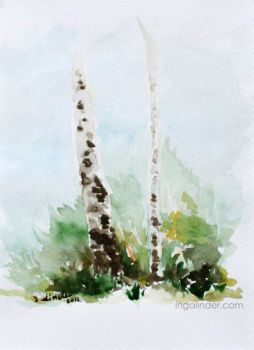 Birches - watercolor by IngaLinder