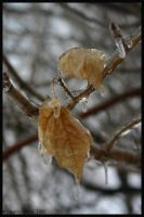 still hanging on by Nariane
