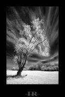 tree rhapsody by infrared-dreams