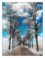 Pathway to Summer Snow by garnettrules21