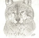 Wolf by MelissaKS