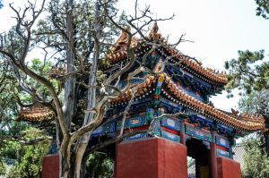 Pagoda in the Trees by Studio5Graphics