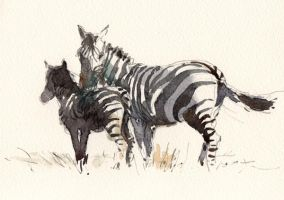 Zebras,watercolor by Tony belobrajdic by artiscon