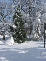 tree snow 01 by CotyStock