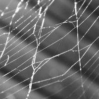 Web by dekorAdum
