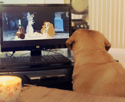 Sosa watching Lady and The Tramp by Aloha-Mermaid