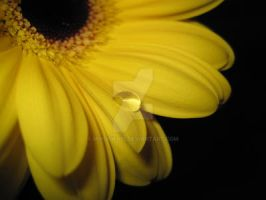 Yellow droplet_2 by Mixdown13