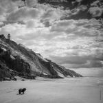 The Dog by tholang