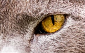 Seeing You by ILTBY