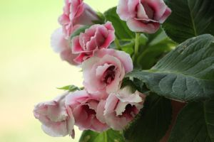 Pink Flowers by GoblinStock