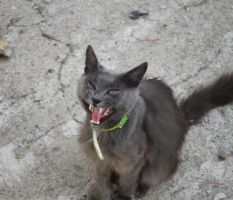 Funny cat by Phileinia