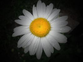 My First Daisy by mim304