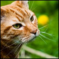 054-365 Just a Cat by mr-MINTJAM