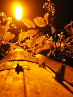 leafs on the lamp by Sy666