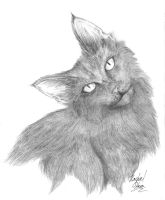 Long Haired Kitty by Saij-Spellhart