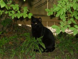 Panther in a Jungle by TheLimeTangerine