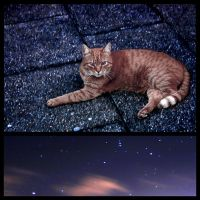 The Cat and the Stars... by AniMal-e