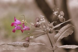 Experiment with color and sepia. by Bermiro