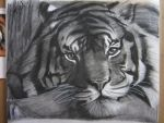 Charcoal Tiger Drawing by Jackolantern104