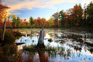 Stock: Autumn Swamp by Celem