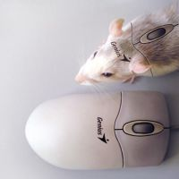 mouse by Limubay