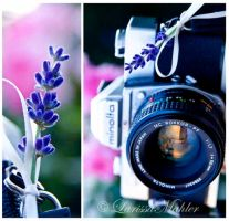 Minolta Camera by Lily-of-the-Vallley