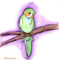 October '09 - Budgie by alyandra