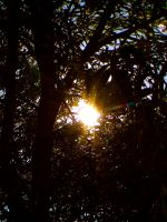 Sun Through The Trees by TropicalxLondon