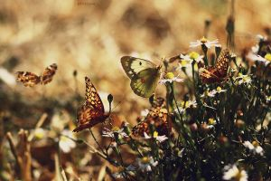 butterfly party by dahmer-land