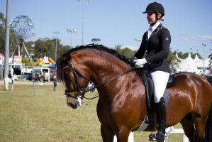 STOCK - Gold Coast Show 368 by fillyrox