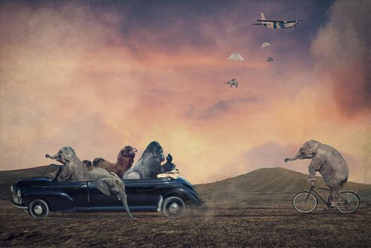 Animals In Transit by paulcresswell