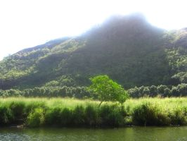 tropical river view 13 by CotyStock