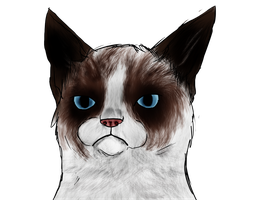 Grumpy Cat by TlMBER