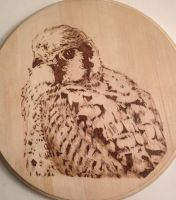 Kestrel-pyrography by lost-nomad07