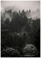 Forest in the mist by Yeoman2b
