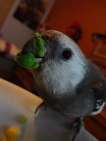 I eats peas by speed7777