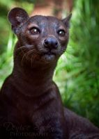 Fossa Girl by DeniseSoden