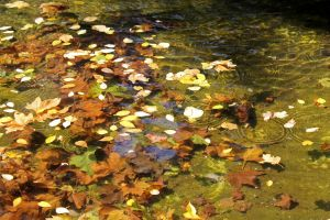 Leaves in the Water by Anonimus79