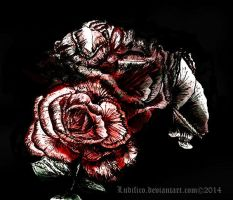 Roses by Ludifico