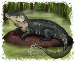 American Alligator by NadilynBeato