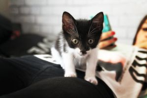 Baby cat by ClaireQuinot