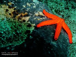 StarFish by hatesymphony