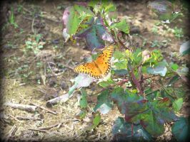 Monarch Butterfly by piercedpinup