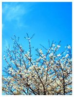 Spring I by Ansteckend
