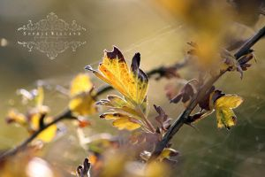 The Gooseberry Bush I by Sophie-Wieland
