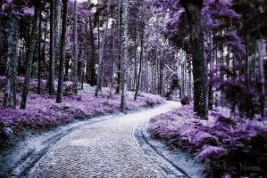 Purple Woods by Clepsidras