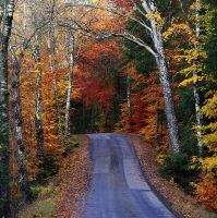 Autumn Road by tuberosum